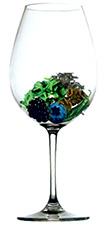 Bodega Soul - Aroma Cabernet Sauvignon (image courtesy of alfabeto de aromas)